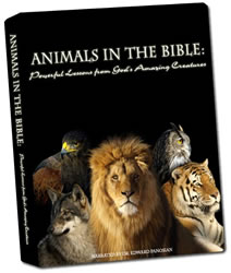 Animals in the Bible DVD