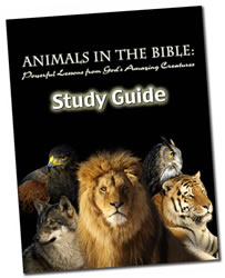 Animals in the Bible Study Guide